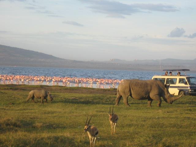 Lake Nakuru