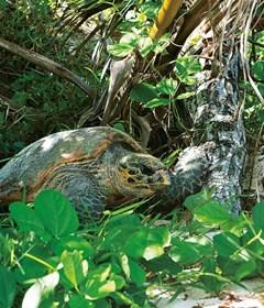 lemuria-seychelles-turtle-1