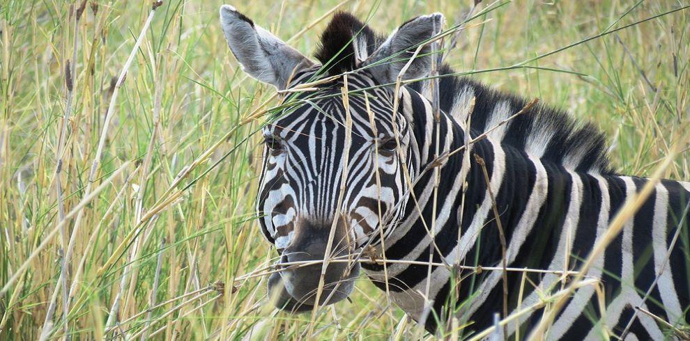 Safari-Guide-EcoTraining-022