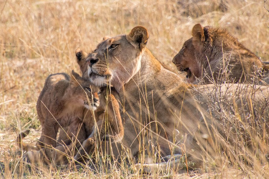 010-circuitGal-Day-7_-Transfer-to-Hwange-National-Park