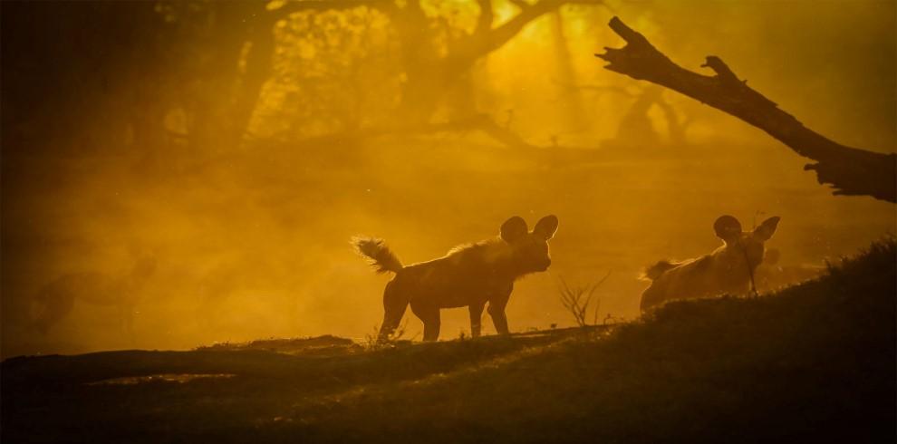 16-dogsbacklit